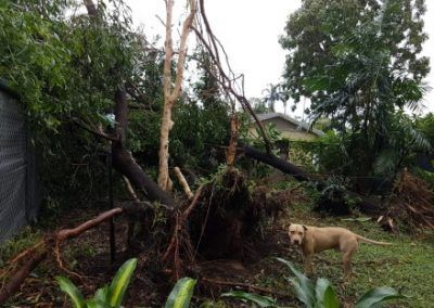 Our backyard after Cyclone Marcus
